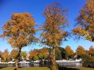 herfstbomen